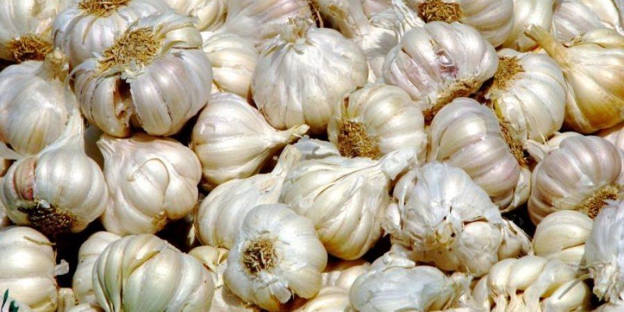 Ajutor de minimis pentru aplicarea programului de susținere a producției de usturoi