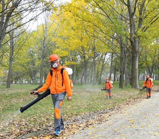 Actiuni de dezinfectie, desinsectie si deratizare in parcurile din Dobroesti